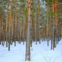 В лесу . Март :: Мила Бовкун