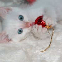 Котёнок по имени Кузя :: Елена Сохарева