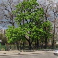 Был месяц май, каштаны зеленели... :: ТАТЬЯНА (tatik)
