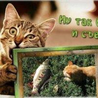**************************************** :: Татьяна и Александр Акатов
