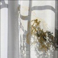 Солнечное  окно... :: Валерия  Полещикова