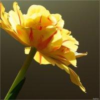 Праздник весны :: Swetlana V