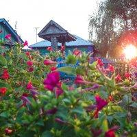 Цветник на закате :: Андрей Студеникин