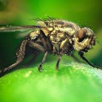 Sly Fly :: Максим Карин