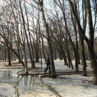 Весна на дворе :: Владимир Фролов
