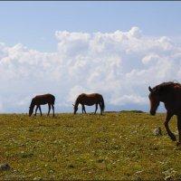 Облачные лошадки :: Наталия Григорьева