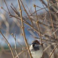 Весна пришла :: Андрей Михайлин