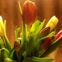 Тюльпаны :: Ольга