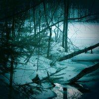 Весна в лесу :: Сергей Воронков