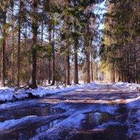 А по лесу бродит весна :: Татьяна Ломтева