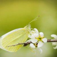 Пришла весна!!! :: Лариса Н
