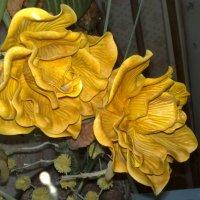 Розы :: алекс дичанский