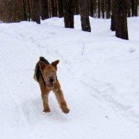 Собачье счастье . :: Мила Бовкун