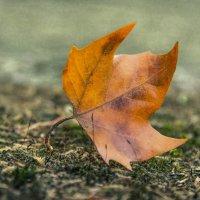 Осеннее одиночество... :: Виктор Чепишко