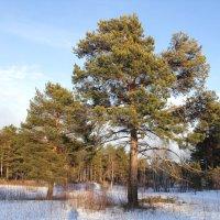 В весеннем лесу. :: Андрей Дурапов
