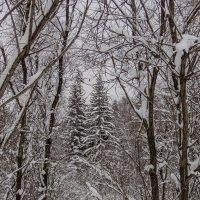 Зима. :: Андрей Боталов