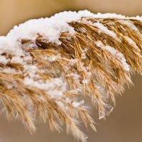 Возвращение зимы в марте. :: Виктор Евстратов