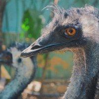 в Хайфовском Zoo :: Eddy Eduardo