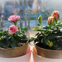 Весна.....) :: Наталья Лютик