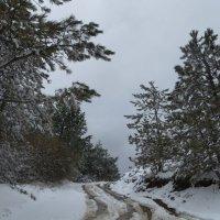 Тропами марта :: Наталья Джикидзе (Берёзина)