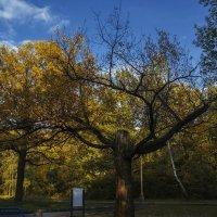 В парке :: Андрей Баськов