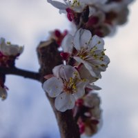 Весна на носу :: VAHE DILANCHYAN