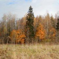 Панорама осеннего леса :: genar-58 '