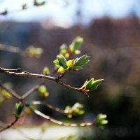 весна :: lilya_ki .