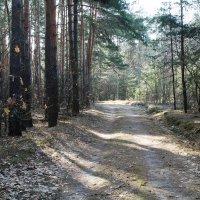 Мартовский лес :: Elena Gaybura