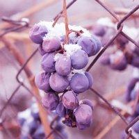 Виноград :: Юлия Круглякова