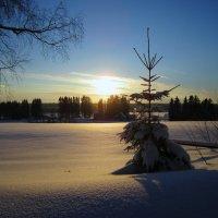 Зима :: lenrouz