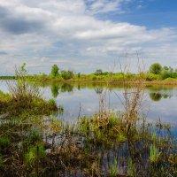 Рыбные места :: Валентин Котляров