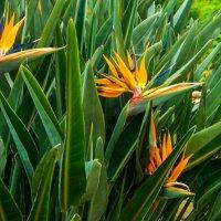Цветы :: EDO Бабурин