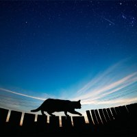 закатный кот :: Анна Вершкова