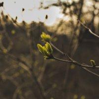 Весна :: Дмитрий Чернов