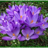 Весенний букетик  для  Вас.... :: Galina Dzubina