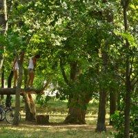 На сломленном дереве :: Владимир Болдырев