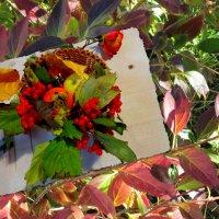 Осенняя корзинка... :: Тамара (st.tamara)