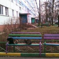 Кошки на пенсии. :: Ольга Кривых