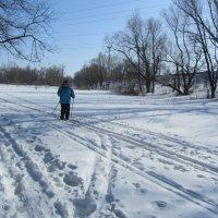 лыжница :: tgtyjdrf