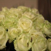цветы. :: Вася Галущинский