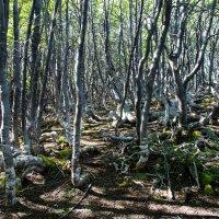 Загадочный лес :: Irina Shtukmaster