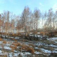 Ещё в полях белеет снег... :: nadyasilyuk Вознюк