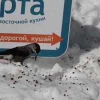 Шерегеш. Март 2015. :: Олег Афанасьевич Сергеев