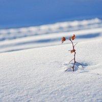 Среди снегов :: Валерий Талашов