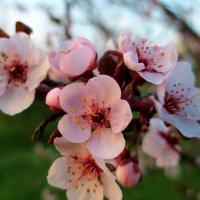Весна... :: евгения