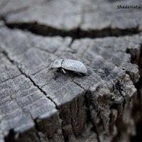 Что за жук :: Наталья (ShadeNataly) Мельник