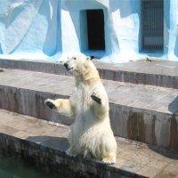 Кай - главный герой Новосибирского зоопарка. :: cfysx