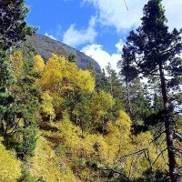 В лесах, на горных склонах :: Сергей Анатольевич