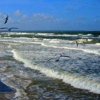 Чайки и Море :: Сергей Карачин